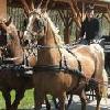 Passeggiata in carrozza a Bikacs e nei dintorni - Hotel Zichy Park - hotel a 4 stelle a Bikacs - prenotazione online